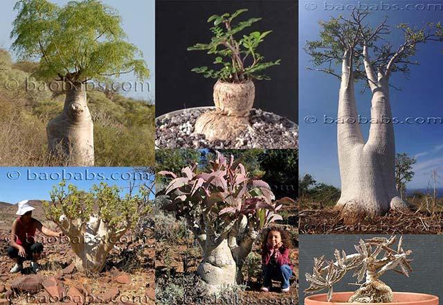 Plantes et graines tropicales exotiques rares for Catalogue de plantes par correspondance