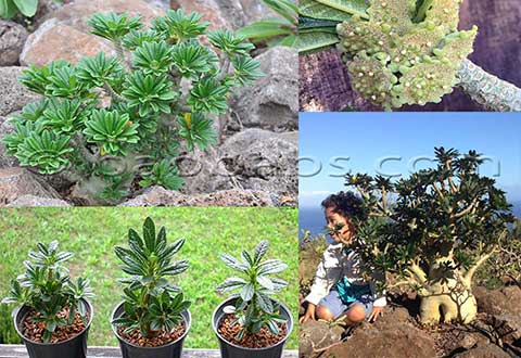 Plantes et graines tropicales exotiques vente par for Catalogue plantes par correspondance